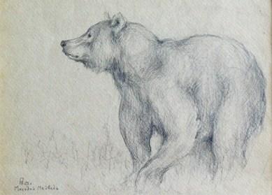 рисунки медведя цветными карандашами